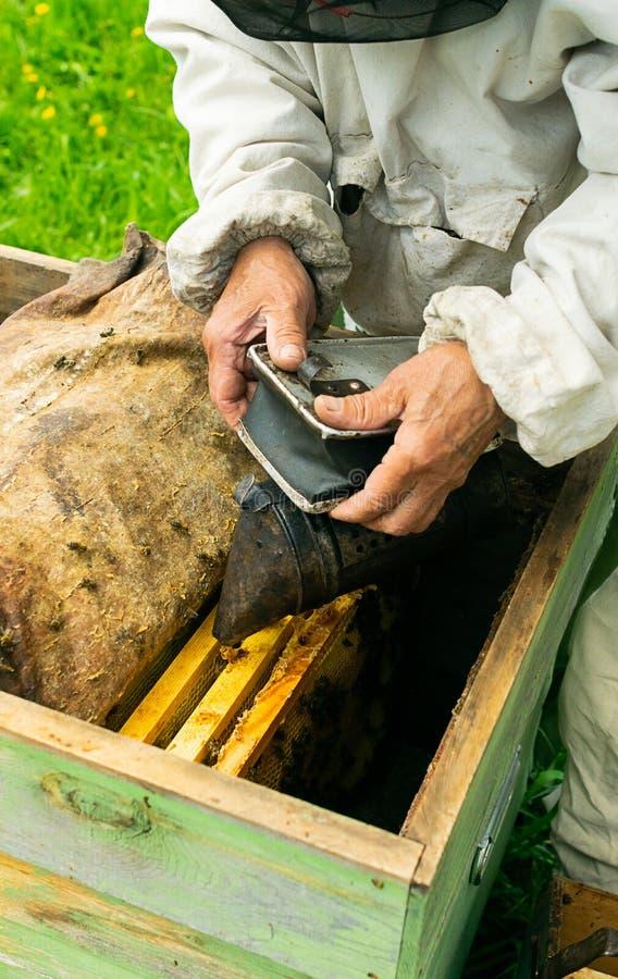 蜂农检查蜂蜂箱和蜂蜜框架  在蜂房的养蜂业工作 r 免版税库存图片