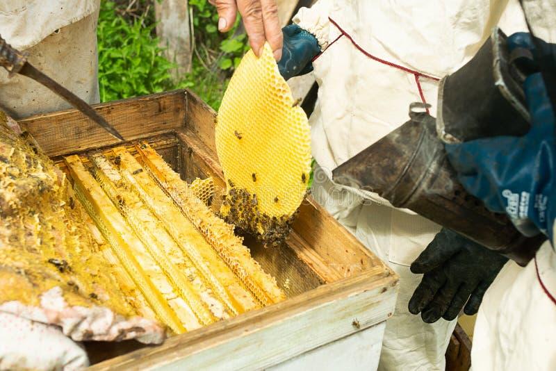 蜂农检查蜂蜂箱和蜂蜜框架  在蜂房的养蜂业工作 r 免版税库存照片