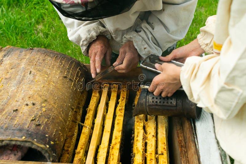 蜂农检查蜂蜂箱和蜂蜜框架  在蜂房的养蜂业工作 r 免版税图库摄影