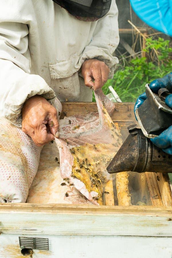 蜂农检查蜂蜂箱和蜂蜜框架  在蜂房的养蜂业工作 r 图库摄影