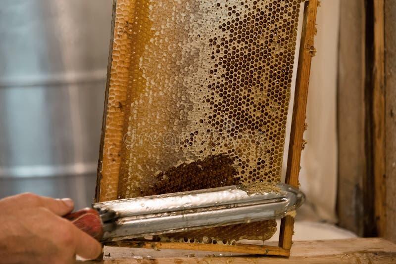 蜂农热的刀子裁减蜡蜂窝 库存图片