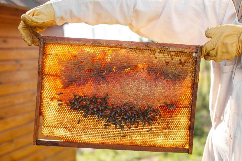 蜂农的特写镜头手拿着与蜂窝的木制框架 收集蜂蜜 养蜂业概念 库存照片