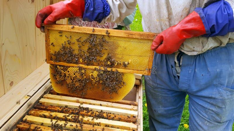 蜂农裁减蜡 库存图片