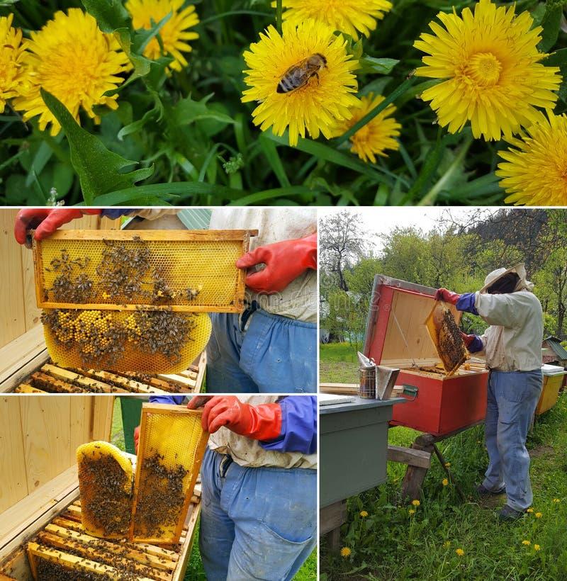 蜂农裁减蜡 免版税库存照片