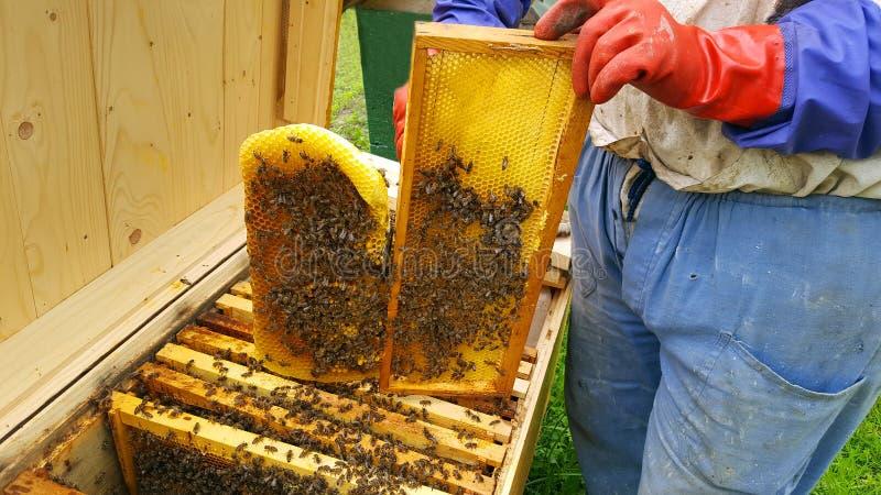 蜂农裁减蜡 图库摄影