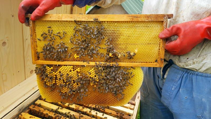 蜂农裁减蜡 库存照片