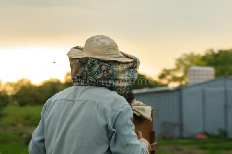 蜂农负担一个蜂箱反对美好的天空背景 库存照片