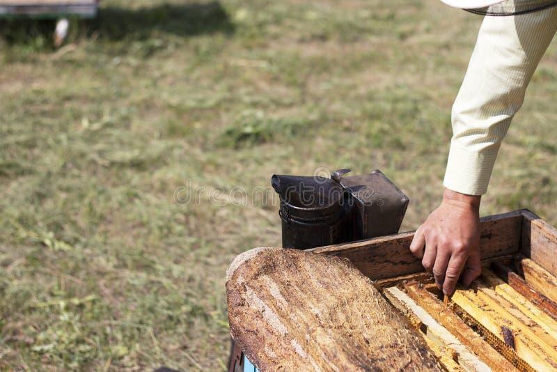 蜂农采取从蜂房的蜂窝 为抽蜂的工具从在蜂房的蜂房 收获蜂蜜,在 免版税图库摄影