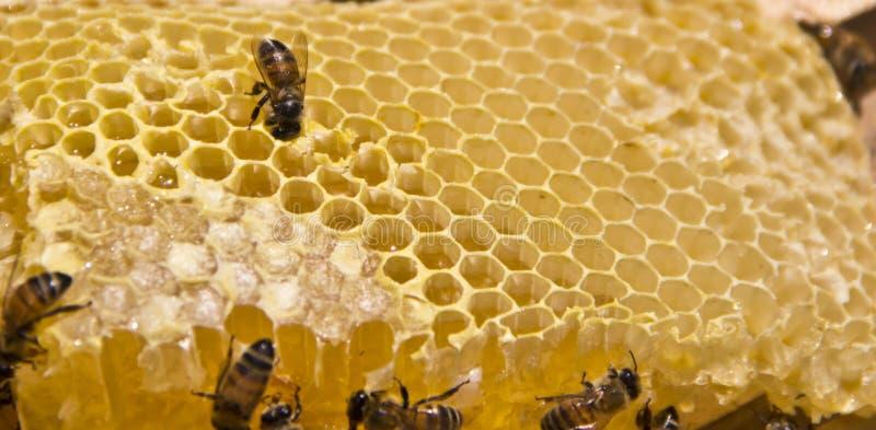 蜂和蜂蜜 免版税库存图片
