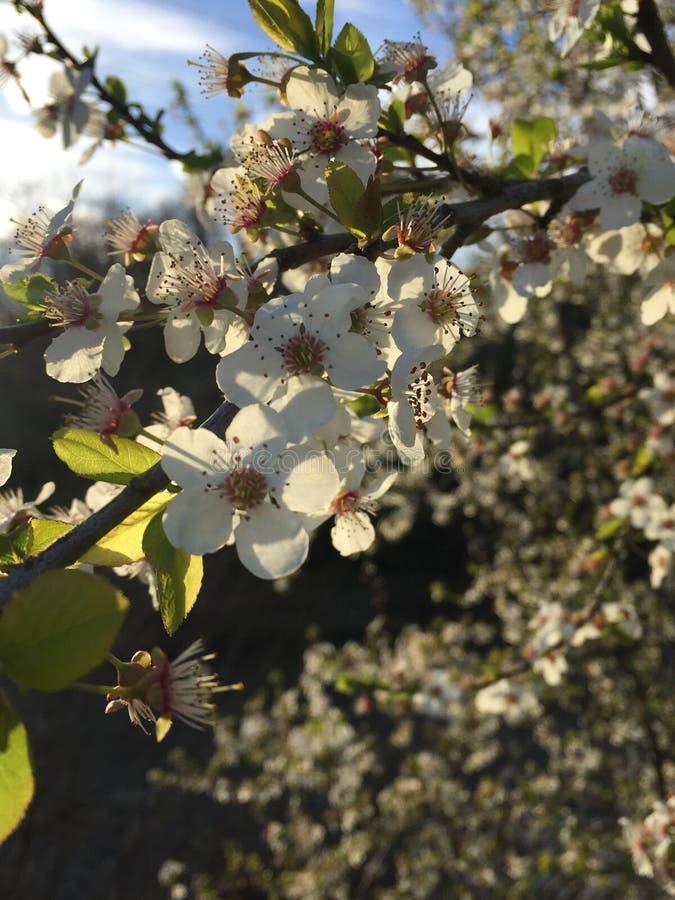 蜂和蜂蜜 免版税库存照片