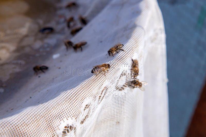 蜂在纺织品背景的夏天喝水 免版税库存图片