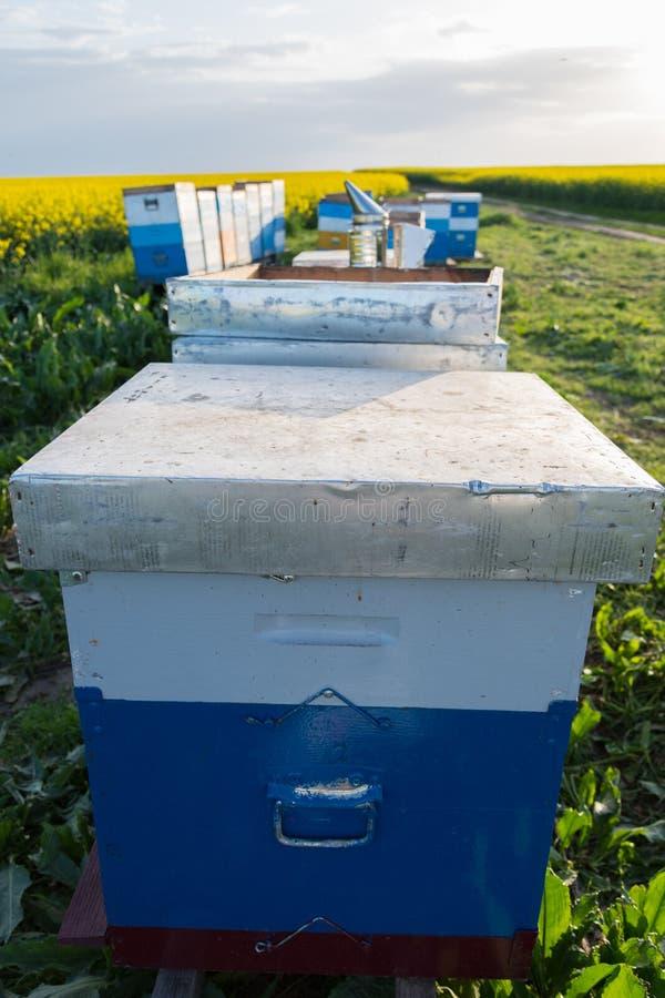 蜂在领域分群 在蜂箱的蜂 免版税库存照片