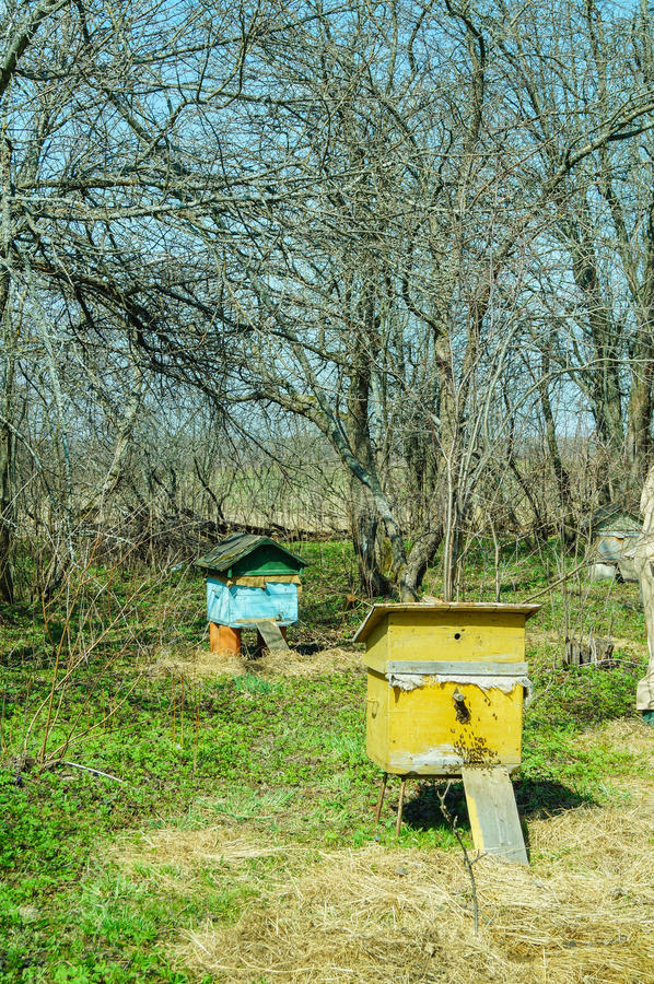 养蜂场在国家放 库存照片