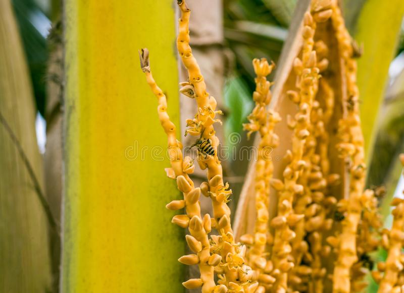 蜂坐棕榈分支 库存照片