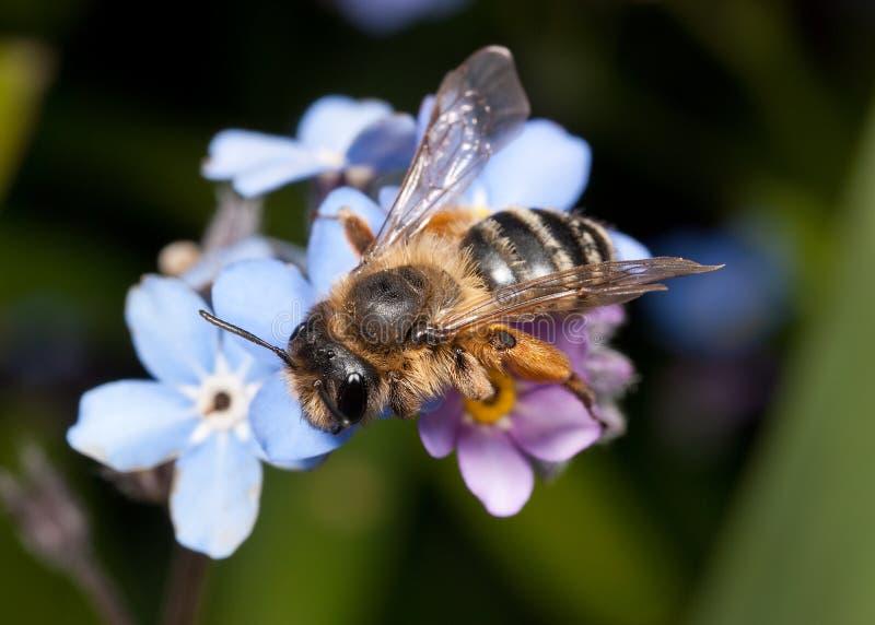 蜂女性开采 免版税库存照片