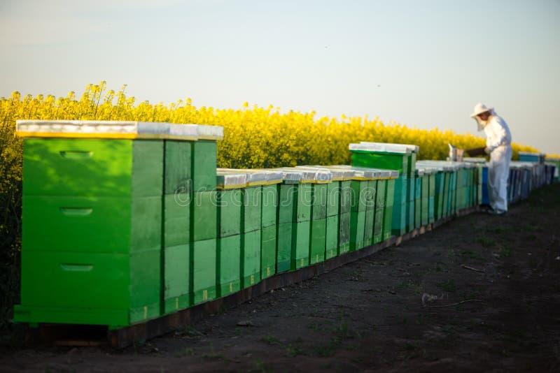 养蜂家在工作 免版税库存照片