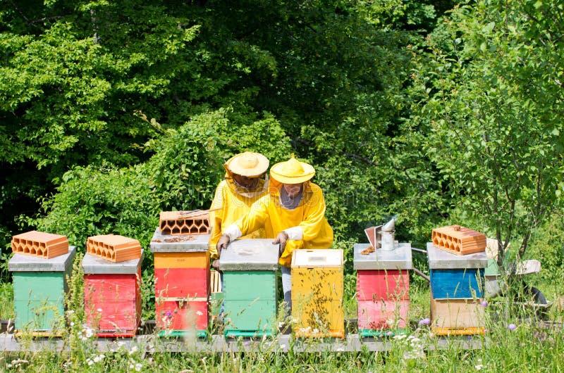 养蜂家工作 免版税库存照片