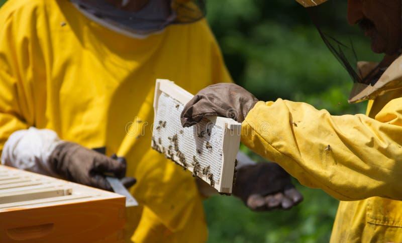 养蜂家 库存照片