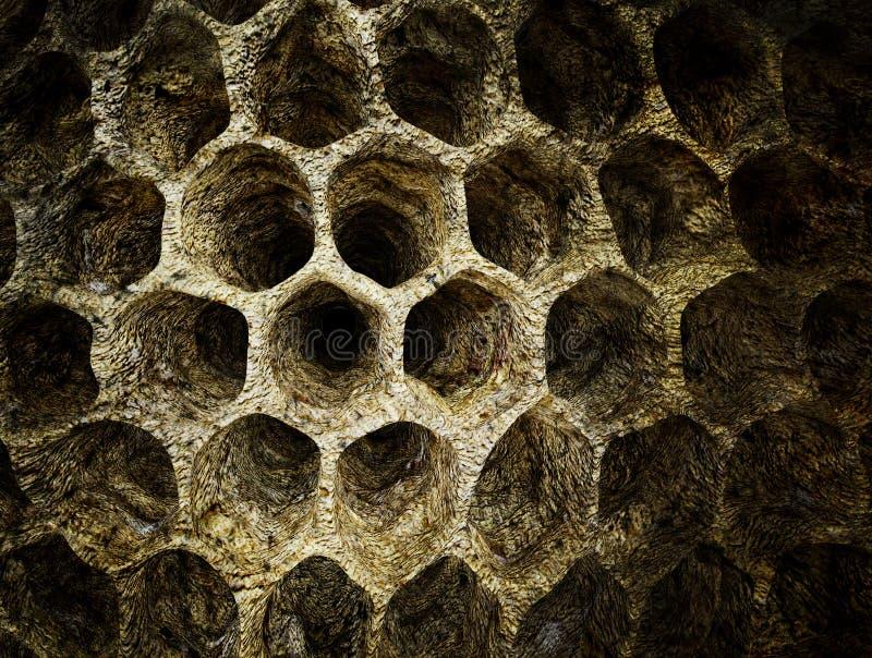黄蜂巢 向量例证