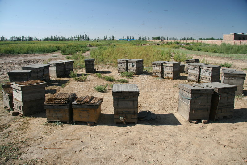 蜂房瓷内蒙古 免版税库存照片