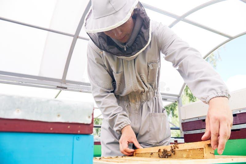 蜂房的年轻蜂农 库存图片