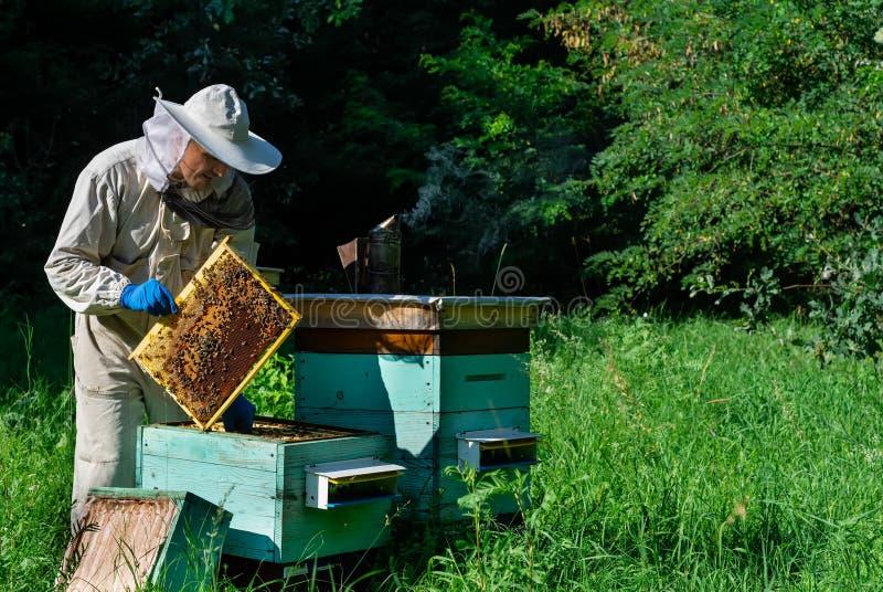 蜂房的蜂农 蜂农与蜂和蜂箱一起使用在蜂房 养蜂概念 免版税库存照片