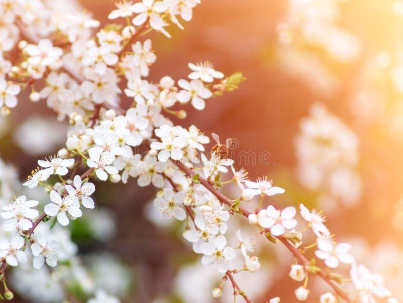 蜂授粉花 库存图片