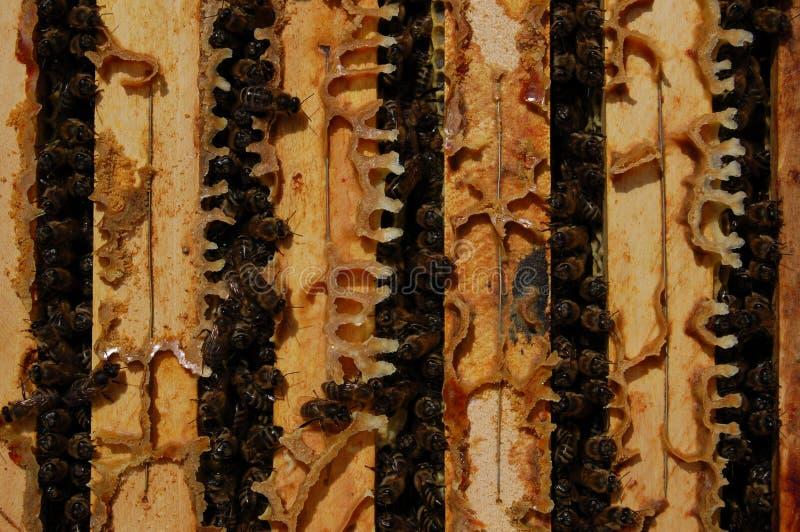 蜂框架 库存照片