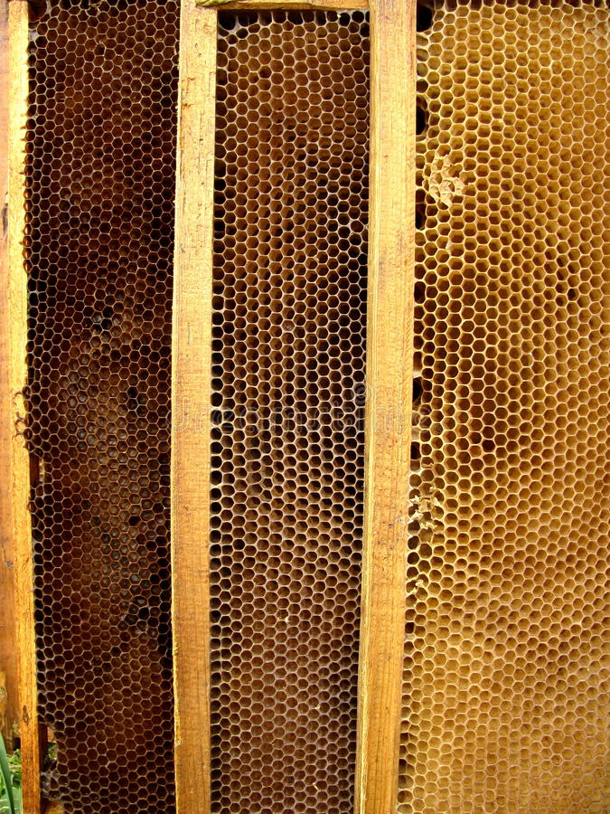 蜂电池蜂蜜 免版税库存图片