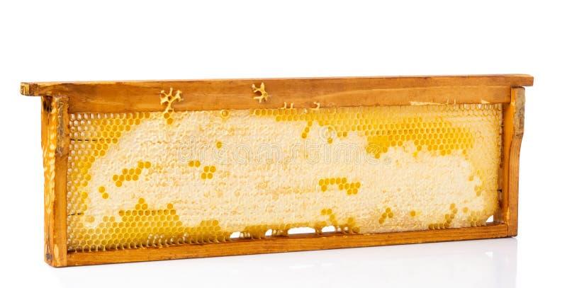 蜂窝构筑用在白色背景隔绝的新鲜的蜂蜜 免版税库存图片