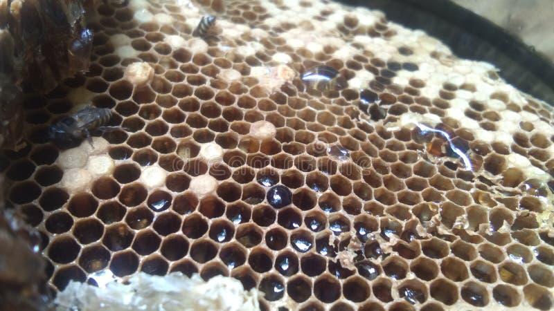 蜂窝用蜂蜜 免版税图库摄影