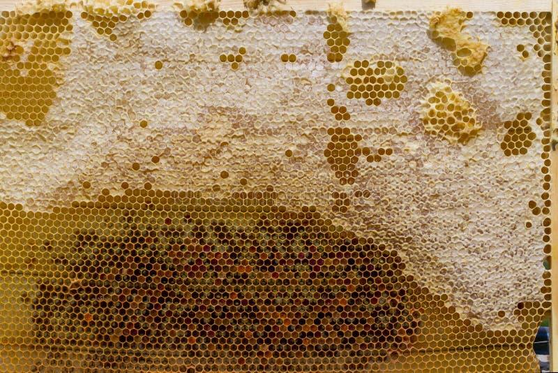 蜂窝用蜂蜜 图库摄影
