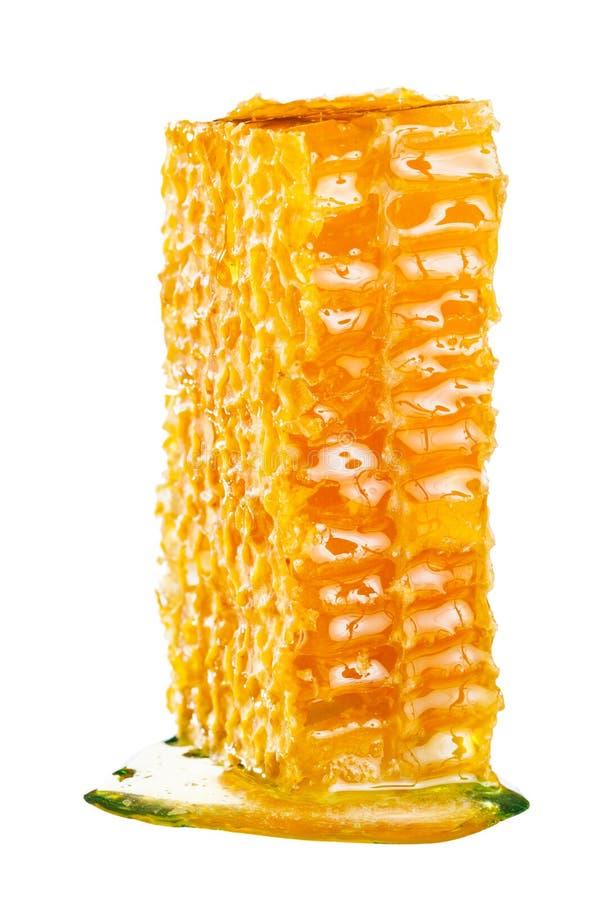 蜂窝用蜂蜜 免版税库存图片