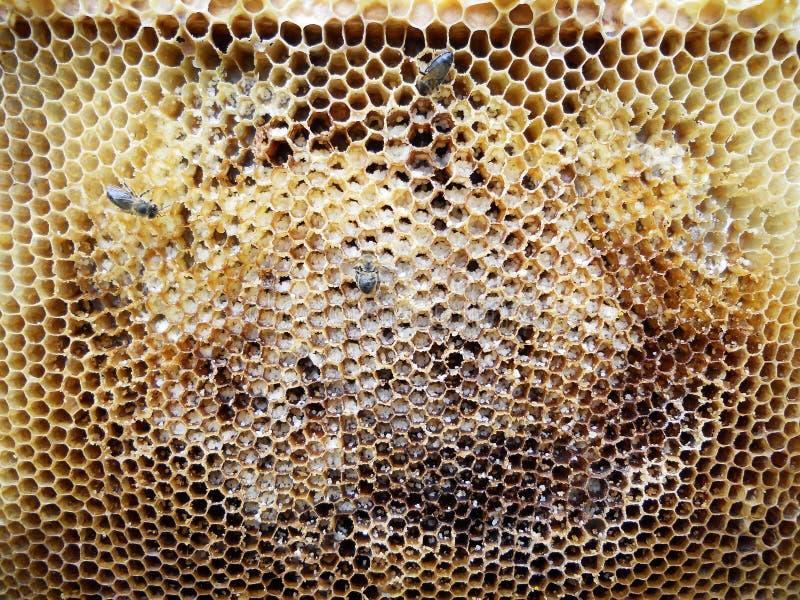 蜂箱蜂蜜 免版税库存图片
