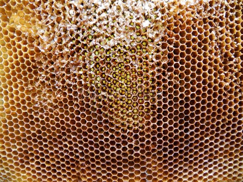 蜂箱蜂蜜 免版税图库摄影
