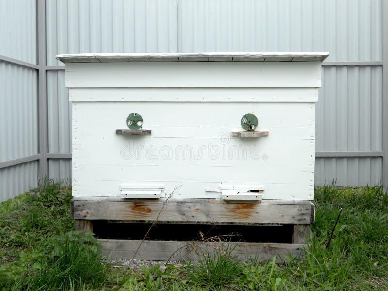 蜂箱蜂蜜 免版税库存照片