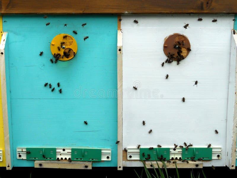 蜂箱蜂蜜 库存照片