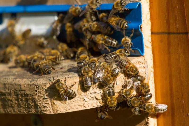 蜂箱 群集在a的蜂宏观射击  库存图片