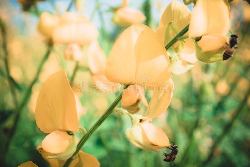 蜂花蜜 免版税图库摄影