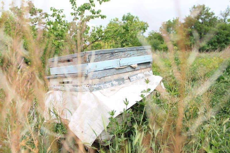 蜂蜂房在森林里 库存图片