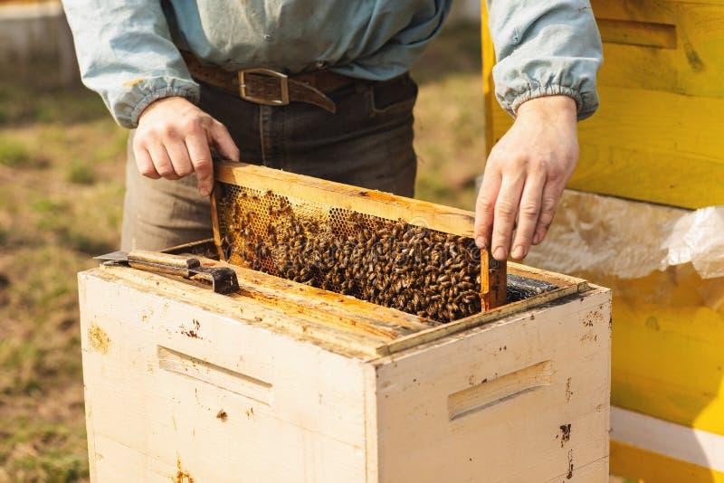 蜂蜂房的框架 收获蜂蜜的蜂农 蜂吸烟者用于在框架撤除前镇定蜂 免版税库存照片