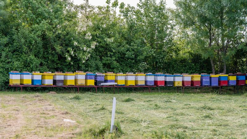 蜂蜂房行在领域的 库存照片