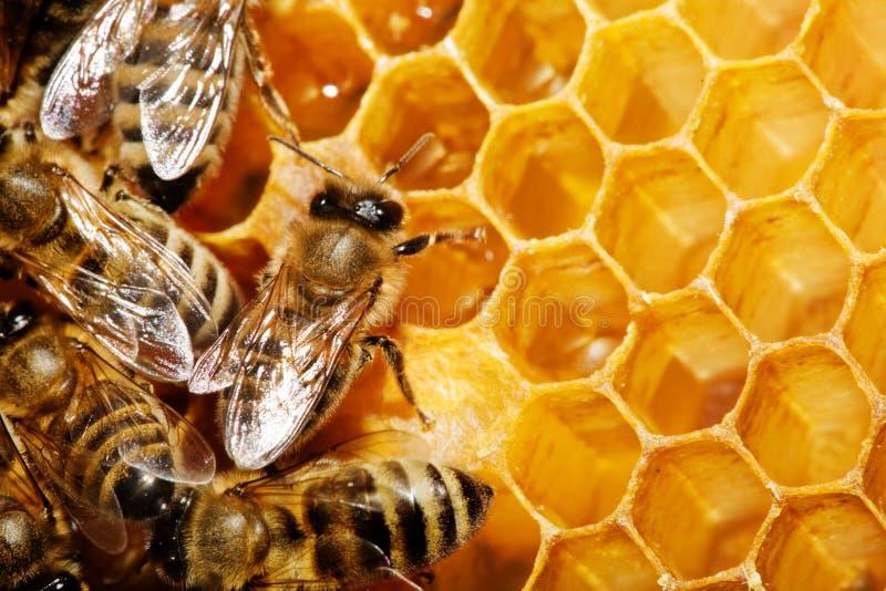 蜂蜂窝 免版税库存图片