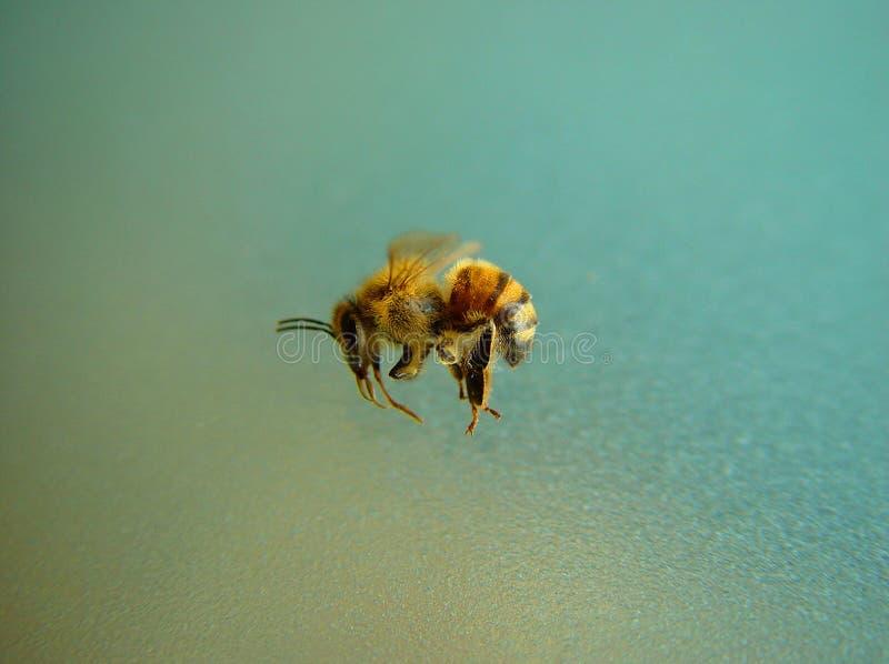 蜂蜂蜜 图库摄影