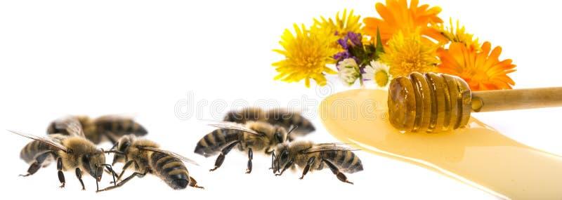 蜂蜜和蜂 免版税库存照片