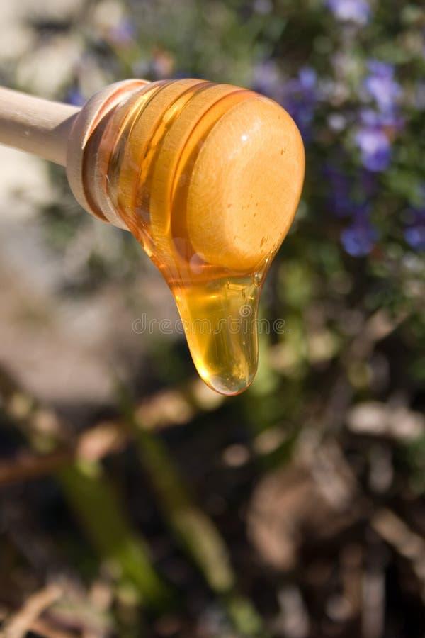 蜂蜜毛毛雨1 库存照片