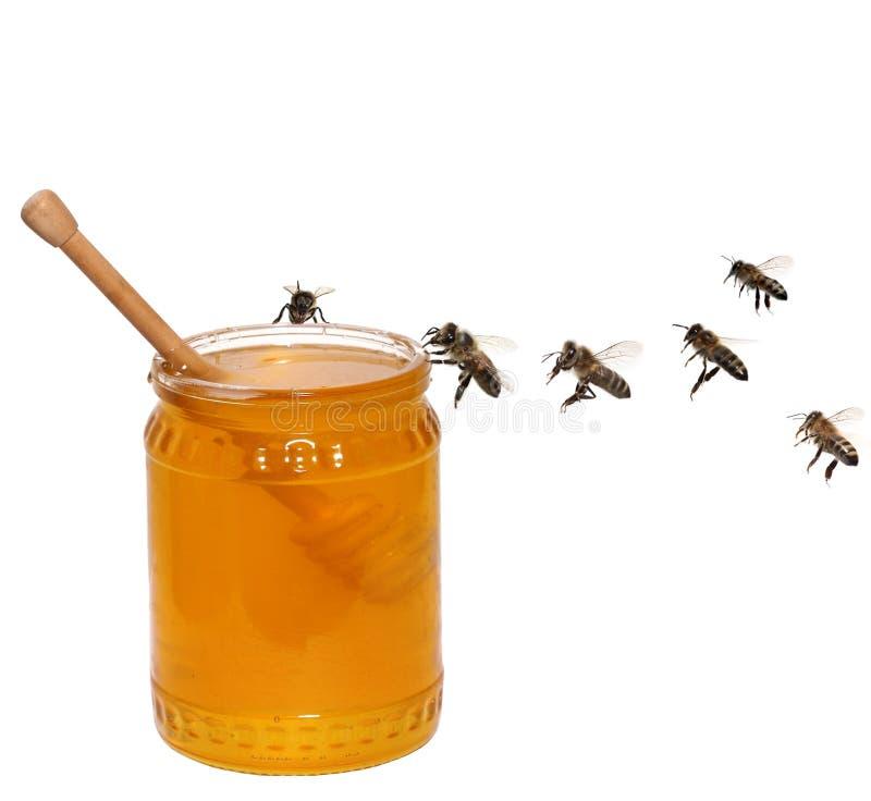 蜂蜜瓶子和蜂 免版税库存图片