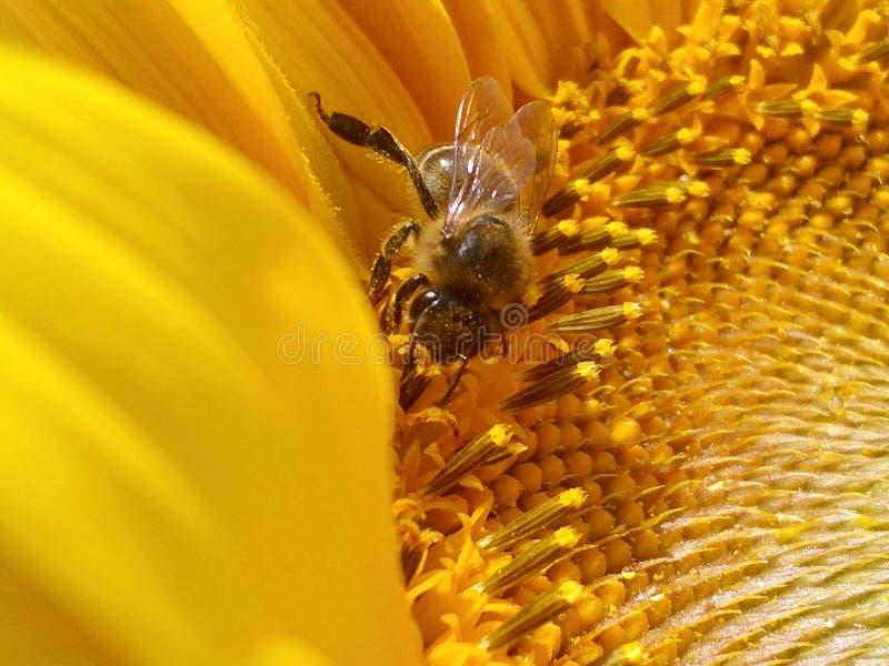 蜂蜜生产 免版税库存图片