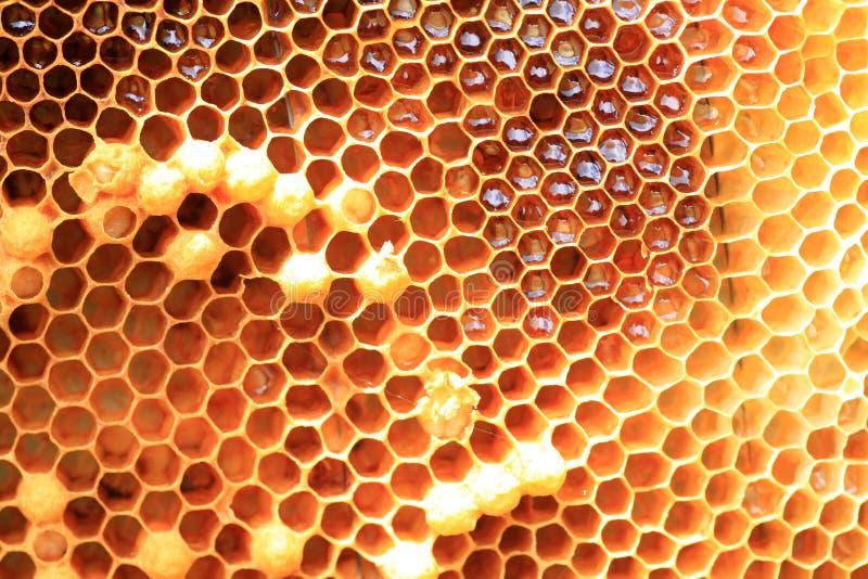 蜂蜜蜂巢 免版税库存图片