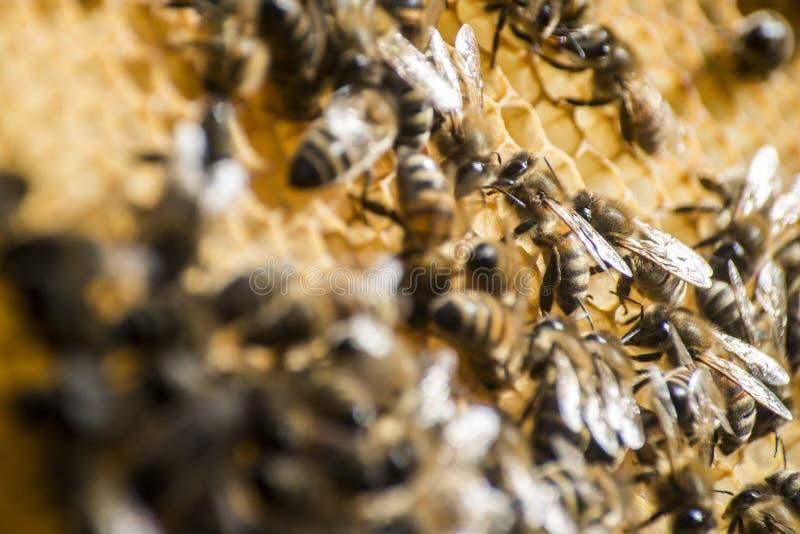 蜂蜜蜂蜂箱蜡框架工作 库存照片